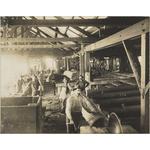 1458B/8a: Interior of Waterous Mill, Yarloop, Western Australia, ca. 1903.