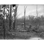 Homestead and orchard on the farm of Mr Andrew Muir, Fernbank near Balbarrup, 21 March 1907