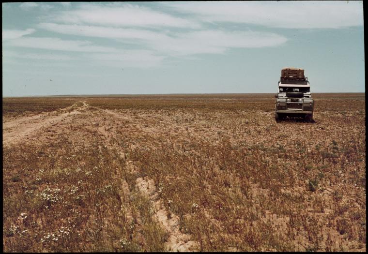 148143PD: Rabbit damage on the Nullarbor Plain, Western Australia, October 1966. (Click to Start Zoom)